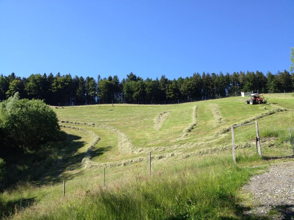 Hirschgehege2